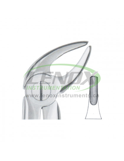 Extracting Forceps Fig.4 Lower Incisors and Canines